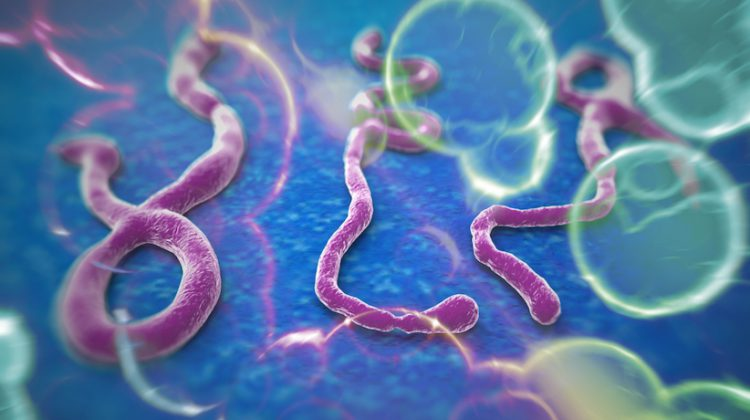 The Ebola Outbreak And Our Need For Change